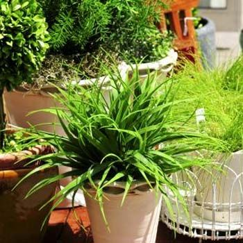 decor your garden with artificial plants