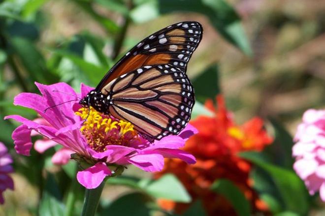 Built a Butterfly_Garden
