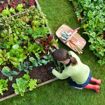 Organic Gardening within your Home