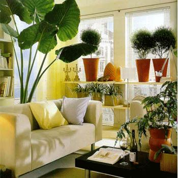 Indoor Plants Decor For Drawing Room