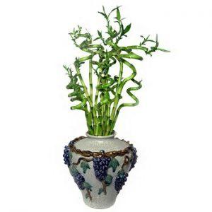 Top 3 Easy steps to Handle Indoor Plants
