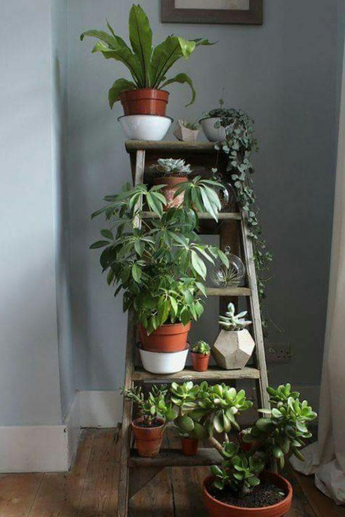 Indoor Plants!